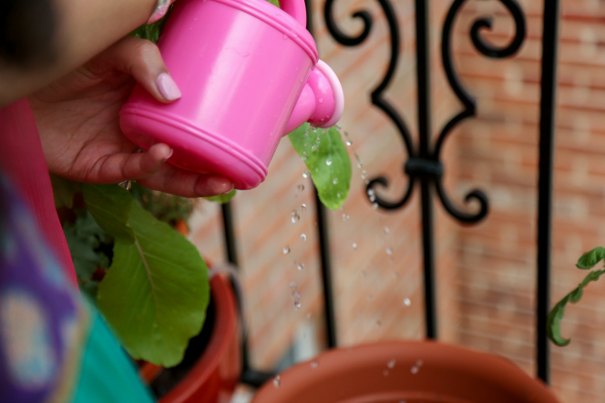 5 Reasons Why Kids Should Garden
